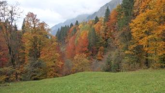 MTB Bödmerenwald